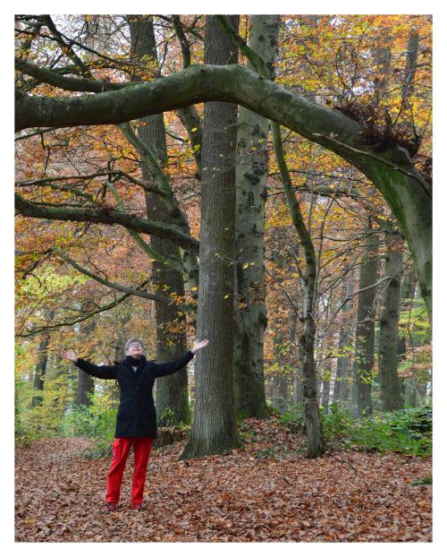 Anmeldung zum Waldbaden in Bad Salzdetfurth bei Heike Herling